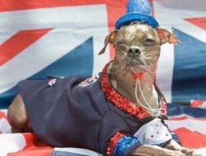 Howlerween Dog Show: **TRICKS & TREATS** - 5 Reasons to go! 1
