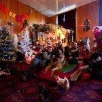 Doggie Christmas Pics - Thanks to BOWOWOW! 3