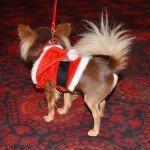 Doggie Christmas Pics - Thanks to BOWOWOW! 24