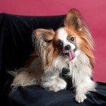 Doggie Christmas Pics - Thanks to BOWOWOW! 20