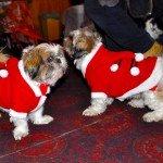 Doggie Christmas Pics - Thanks to BOWOWOW! 29