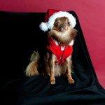 Doggie Christmas Pics - Thanks to BOWOWOW! 7