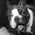 Doggie Christmas Pics - Thanks to BOWOWOW! 21