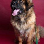 Doggie Christmas Pics - Thanks to BOWOWOW! 10