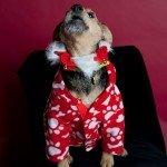 Doggie Christmas Pics - Thanks to BOWOWOW! 15