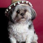 Doggie Christmas Pics - Thanks to BOWOWOW! 32