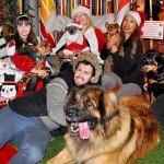 Doggie Christmas Pics - Thanks to BOWOWOW! 1
