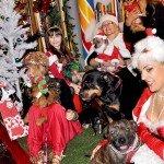 Doggie Christmas Pics - Thanks to BOWOWOW! 30