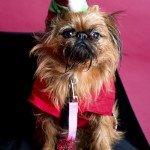 Doggie Christmas Pics - Thanks to BOWOWOW! 18