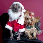 Doggie Christmas Pics - Thanks to BOWOWOW! 33