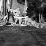 Doggie Christmas Pics - Thanks to BOWOWOW! 4