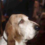Doggie Christmas Pics - Thanks to BOWOWOW! 12