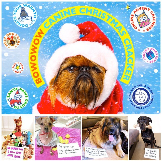 Canine Christmas Cracker Party by BOWOWOW this Saturday