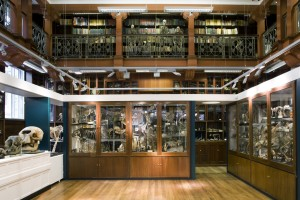 ©UCL, Grant Museum of Zoology and Matt Clayton
