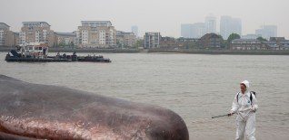 17m Beached Whale Launches Free Greenwich Festival 3