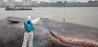 17m Beached Whale Launches Free Greenwich Festival 5