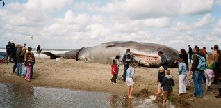 17m Beached Whale Launches Free Greenwich Festival 9