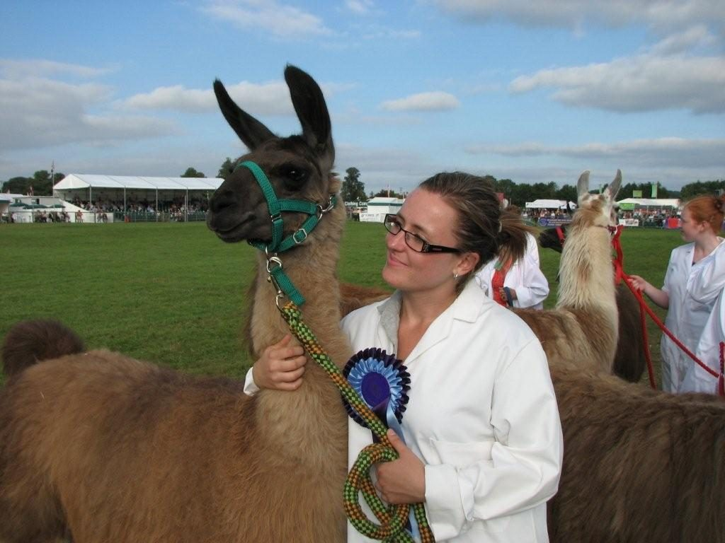 CANCEL YOUR WEEKEND PLANS and head to the Berkshire Show: It's the Year of the Llama 1