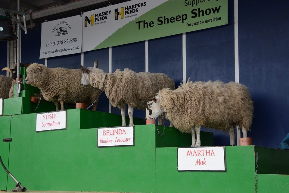 CANCEL YOUR WEEKEND PLANS and head to the Berkshire Show: It's the Year of the Llama 3